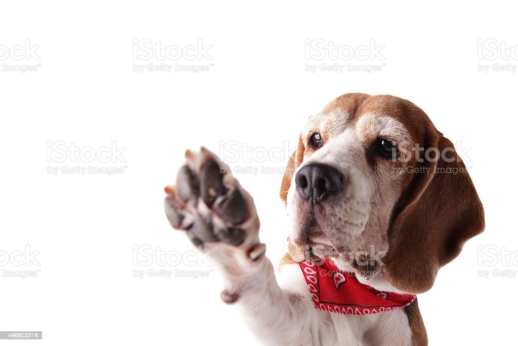 Give me a paw! stock photo