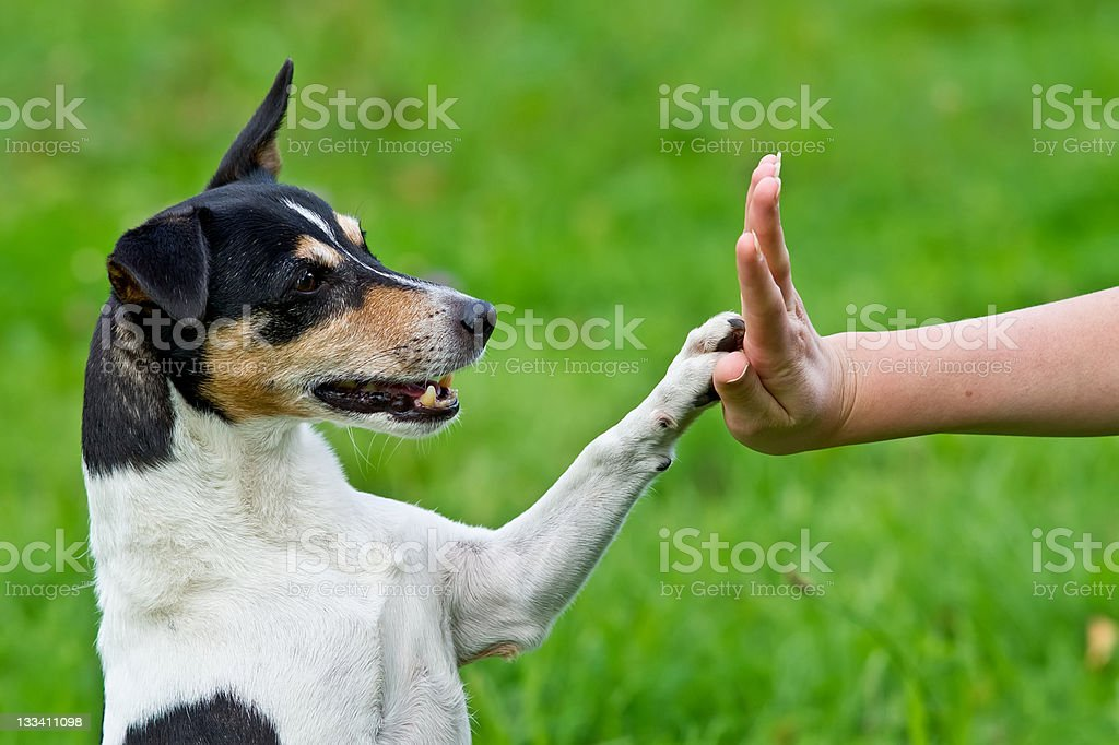 Give me five stock photo