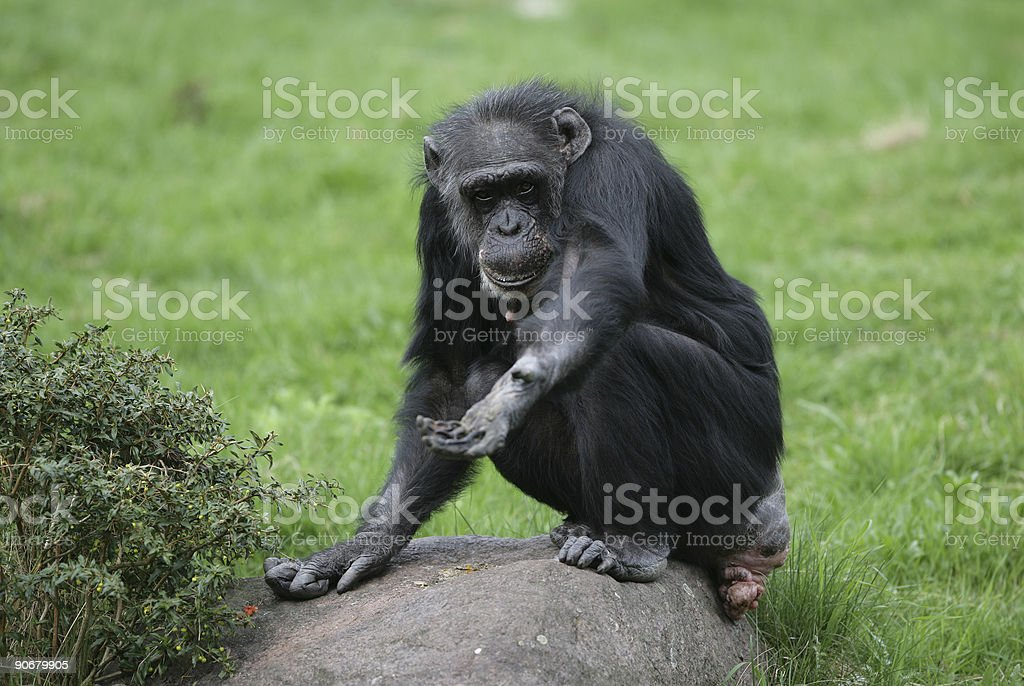 Give me food #2 royalty-free stock photo