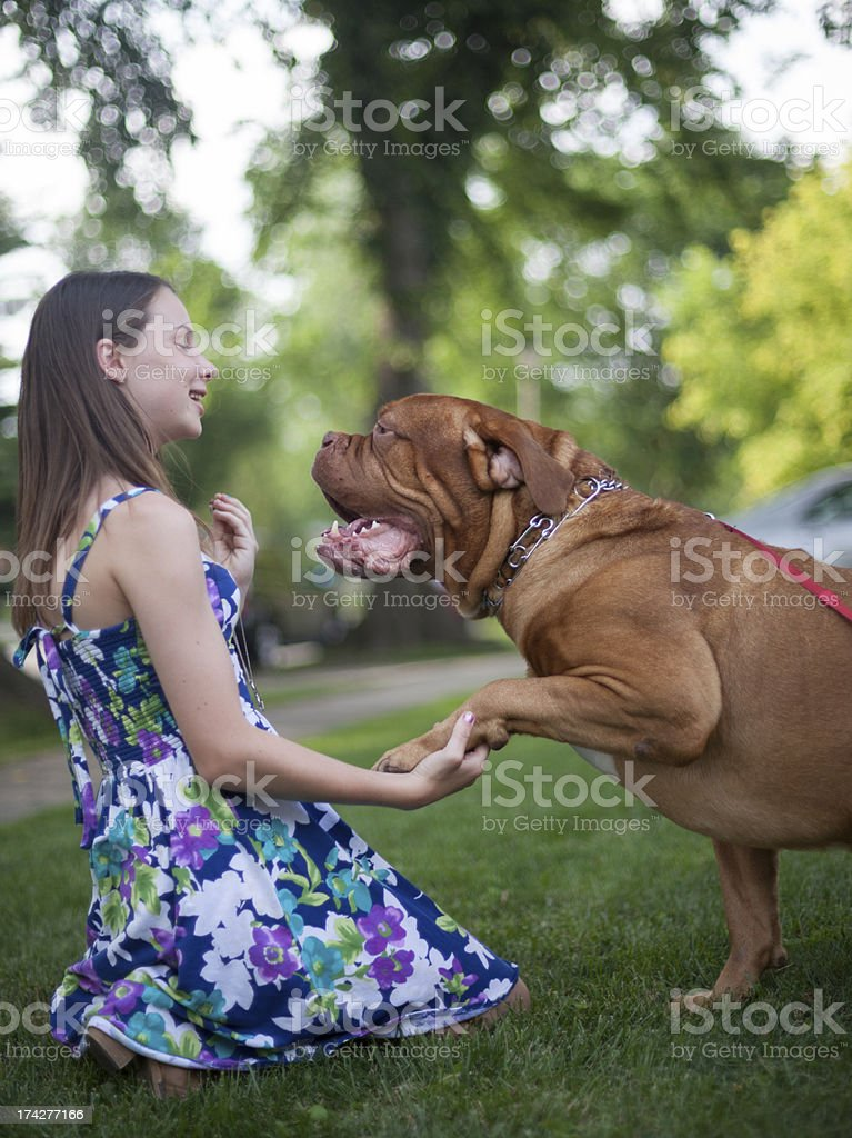 Give Me Paw stock photo
