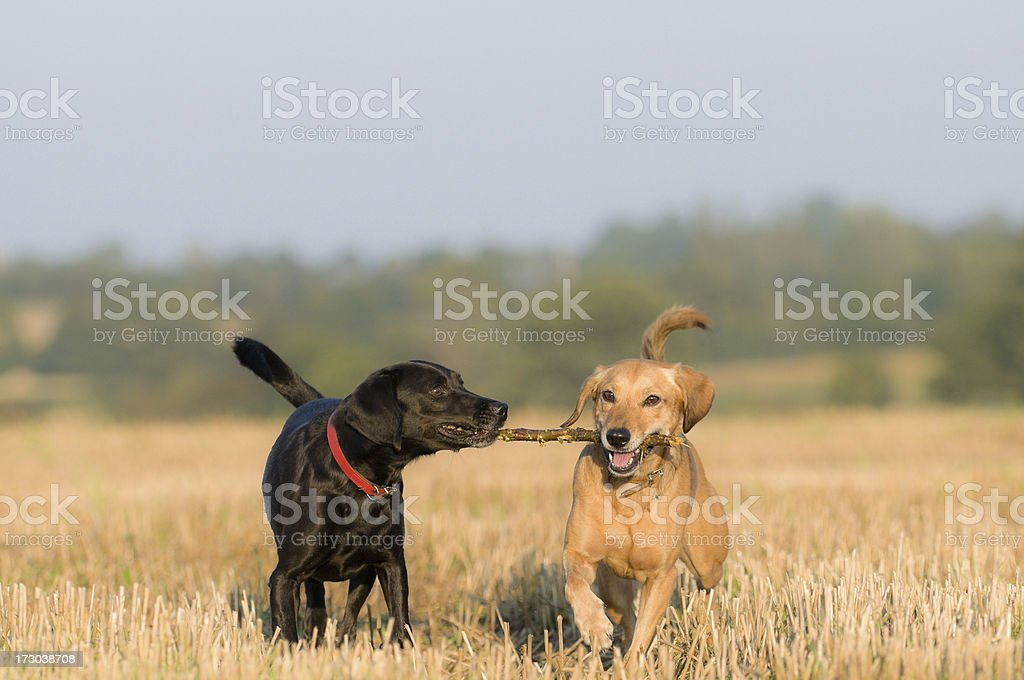Give that to me! royalty-free stock photo