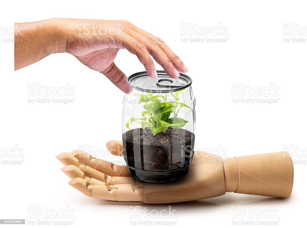 Give the plant in can stock photo