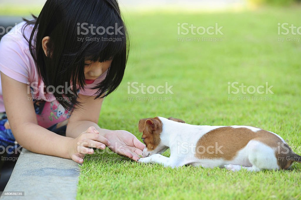 giving a dog snack stock photo