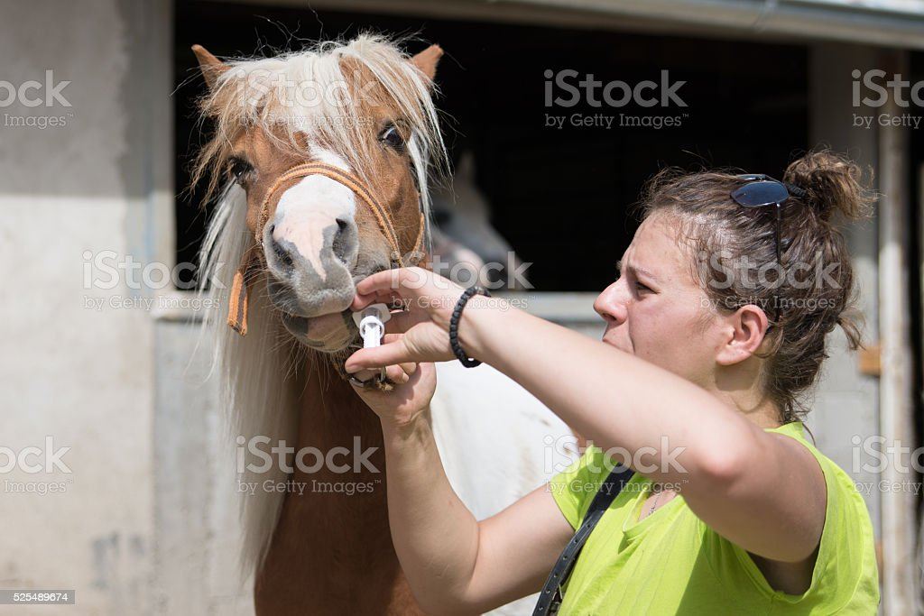 Giving a medicine to a pony stock photo