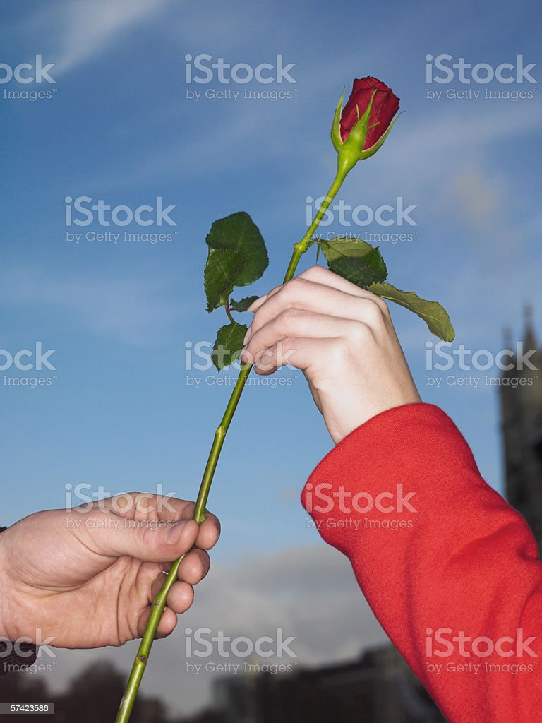Giving a red rose stock photo