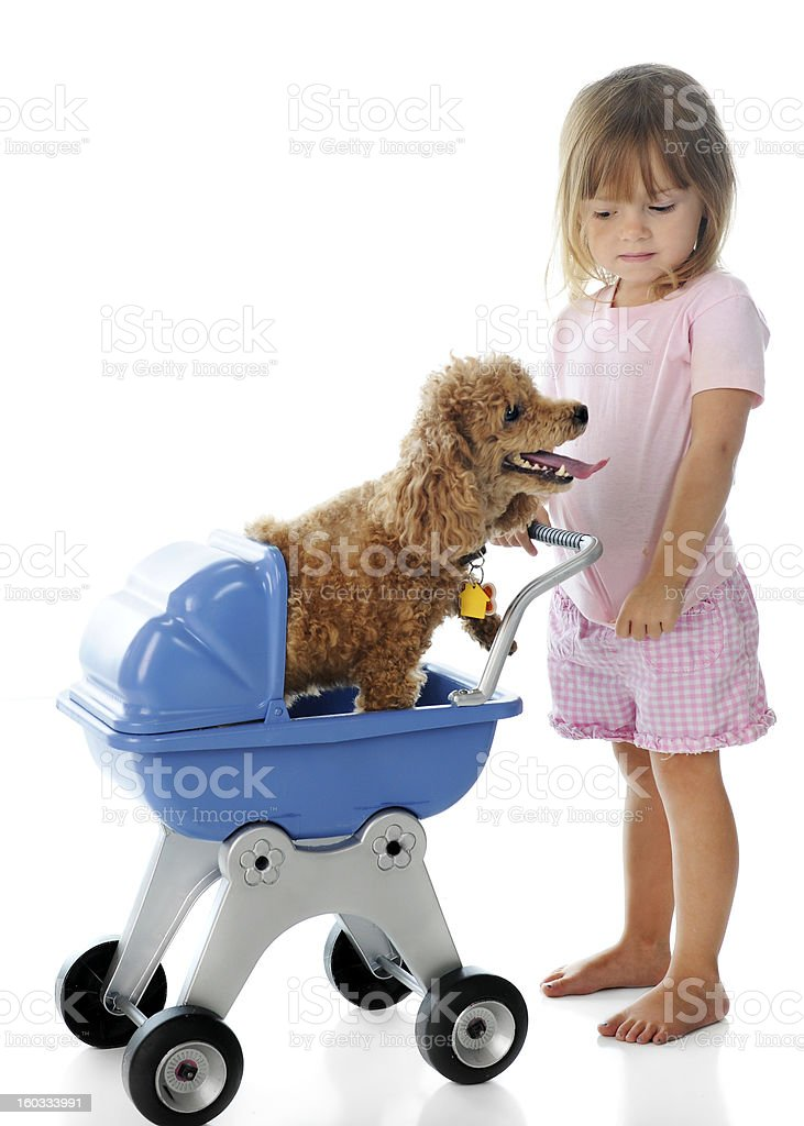 Giving Doggie a Ride royalty-free stock photo