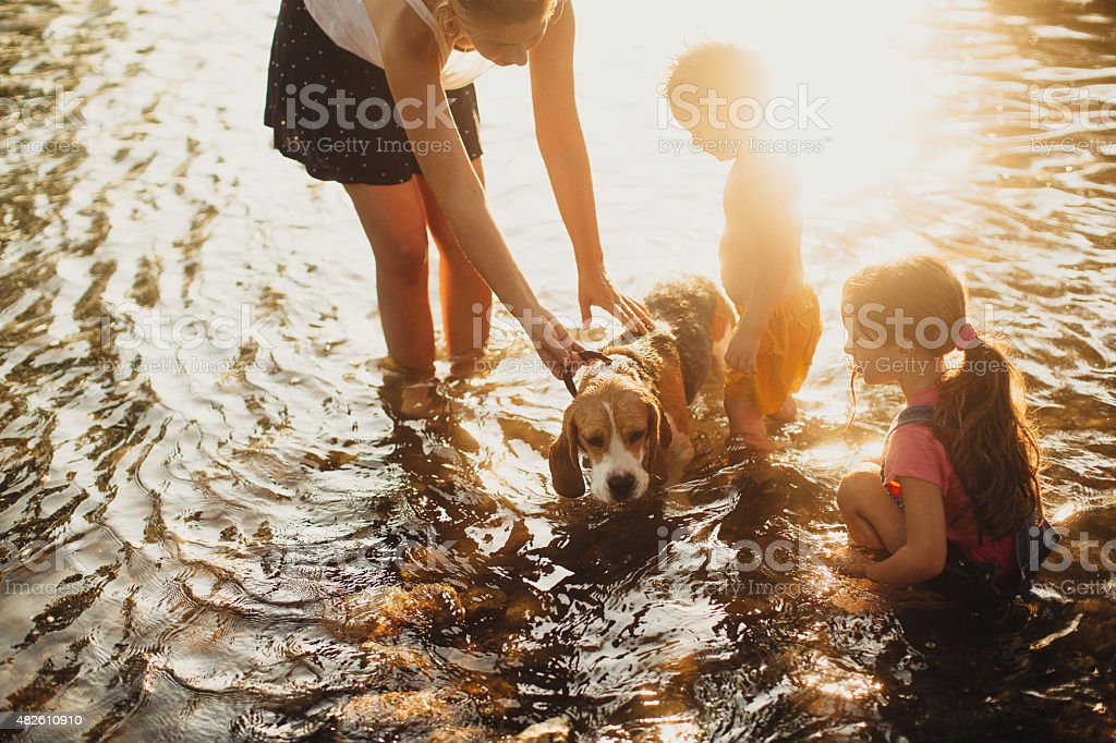 Giving our dog a bath in the river stock photo