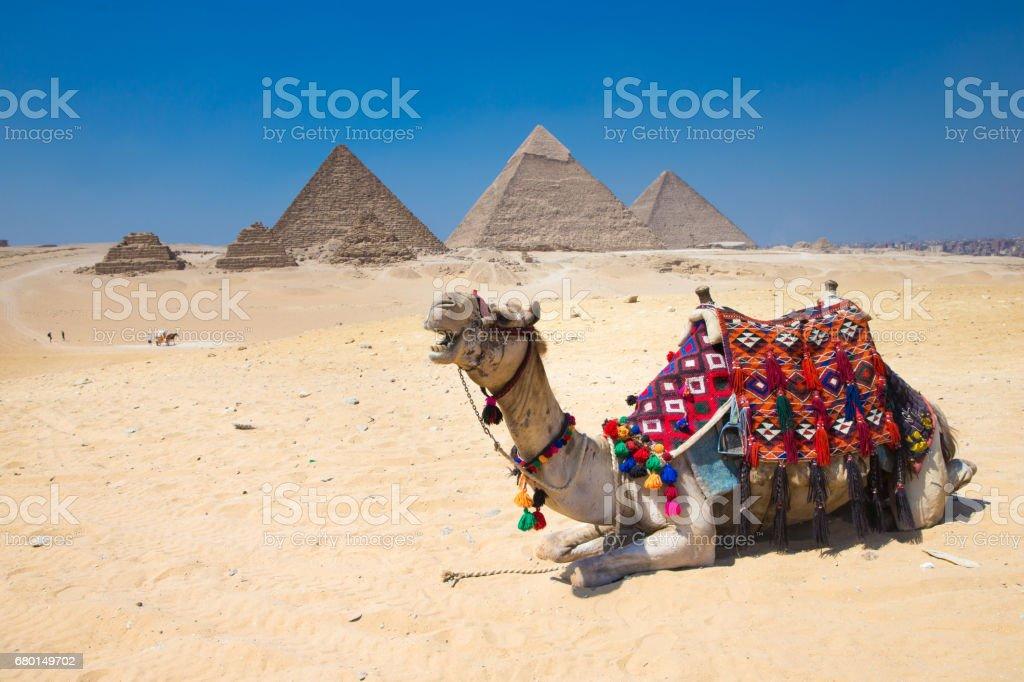 Giza in Cairo, Egypt. stock photo