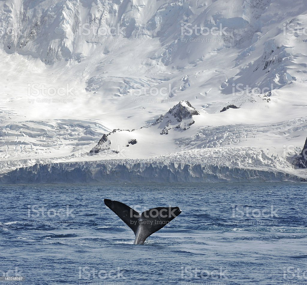 Glacier and Whale royalty-free stock photo