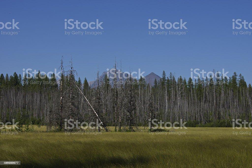 Glacier Meadow stock photo