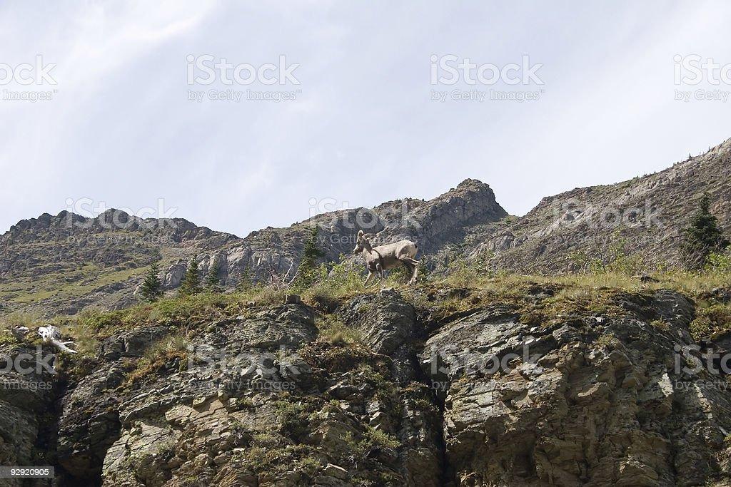 Glacier National Park, Montana royalty-free stock photo