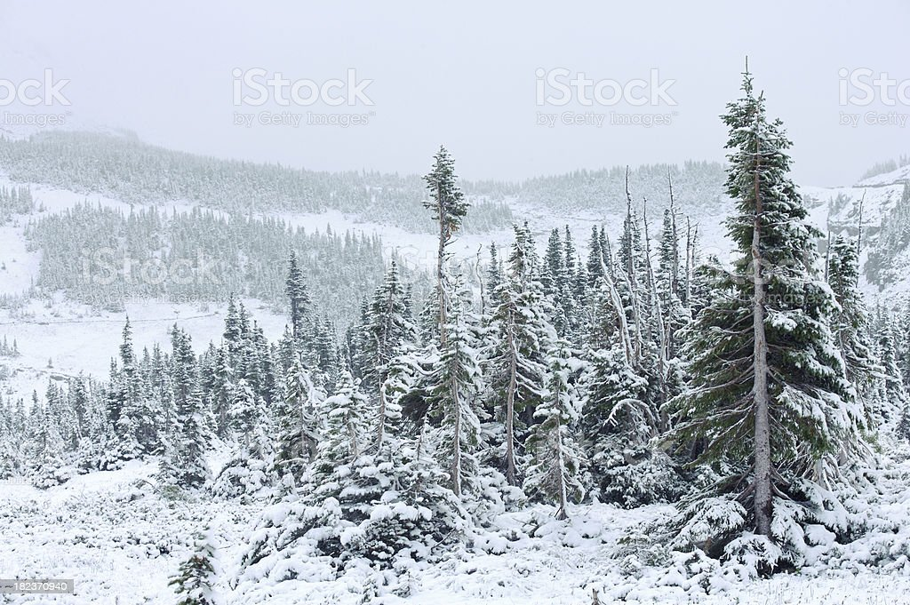 Glacier National Park snow scene royalty-free stock photo