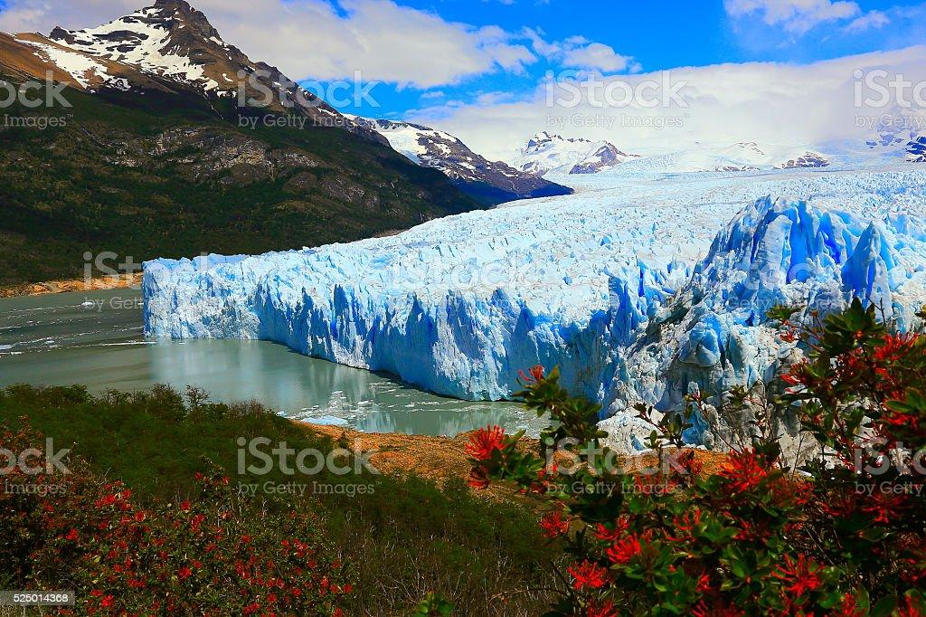 Glacier Perito Moreno, spring flowers, Patagonia Argentina, El Calafate stock photo