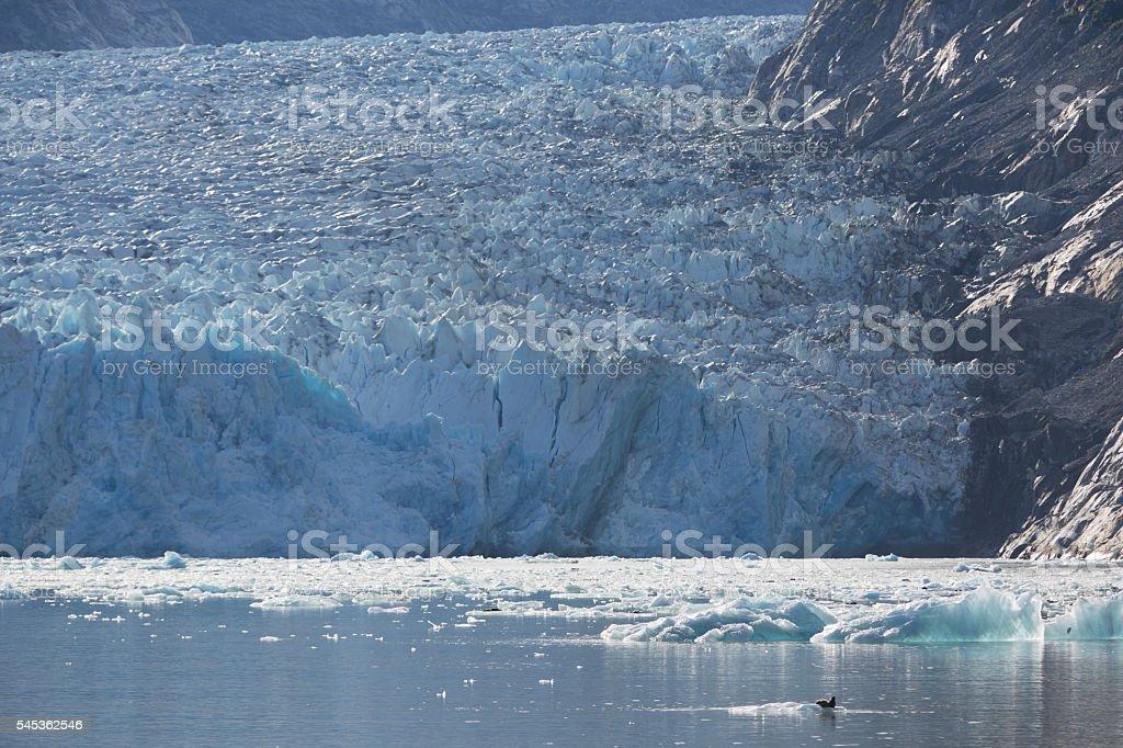 Glacier vs. Seal stock photo