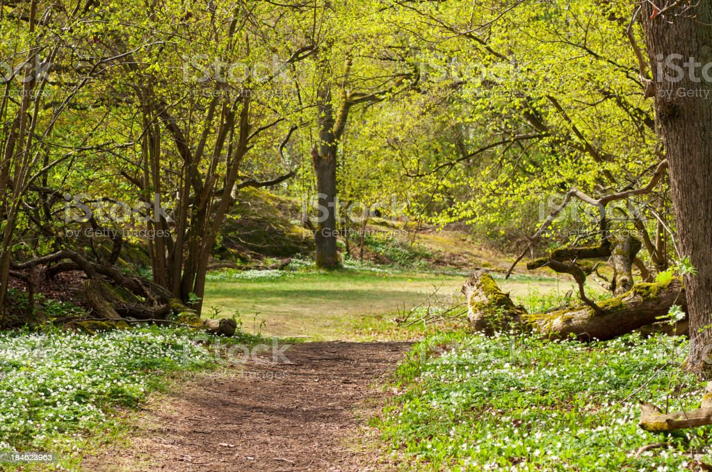 Glade in spring forest royalty-free stock photo