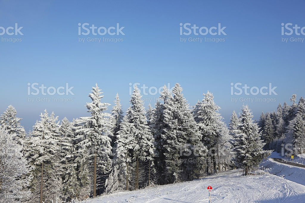 Glade in winter forest royalty-free stock photo