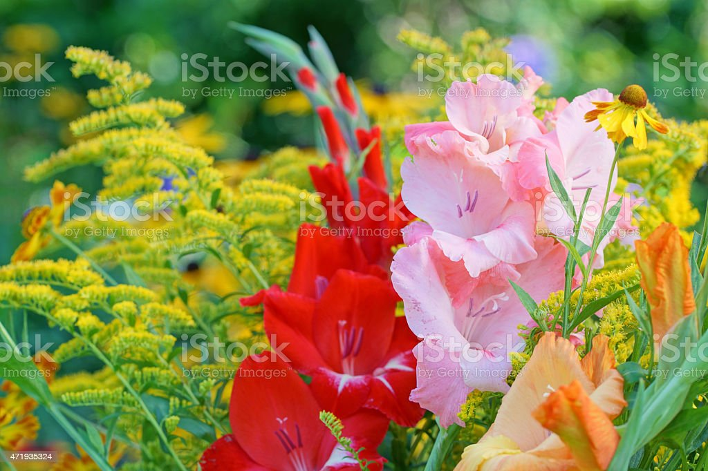 Gladiola and golden rod stock photo