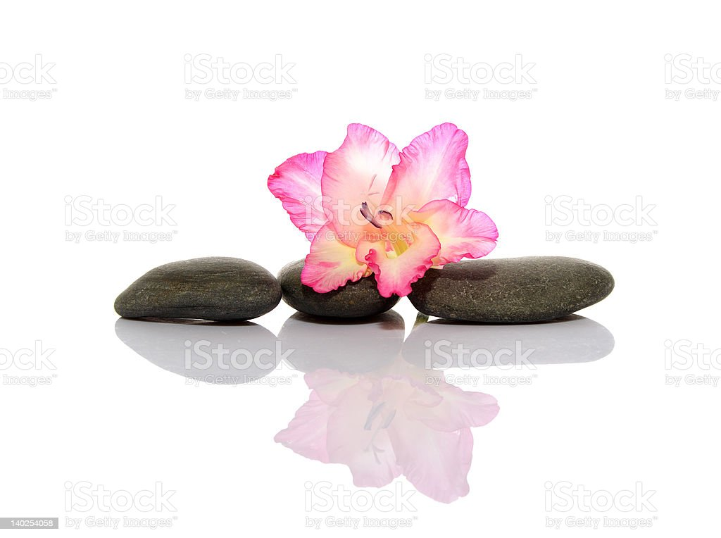 Gladiola and pebbles royalty-free stock photo