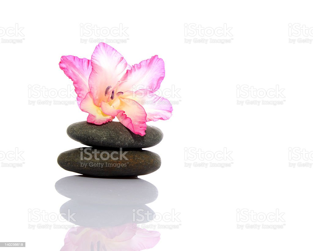 Gladiola and Pebbles stock photo