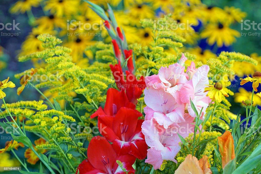 Gladiola, echinacea and golden rod stock photo