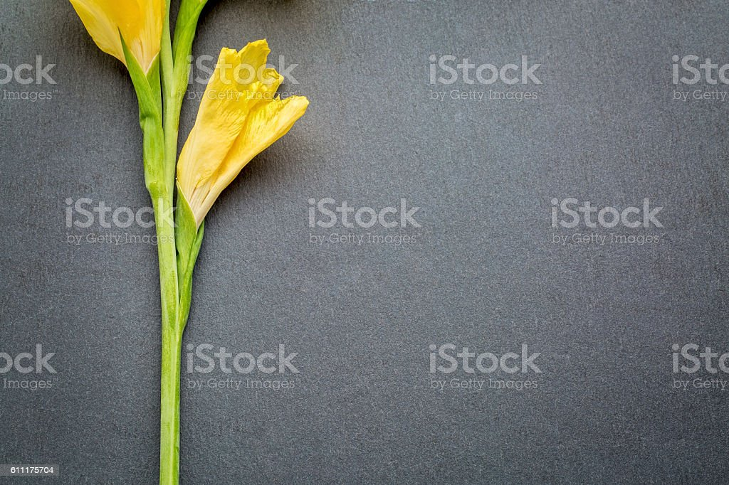 gladiola flower abstract stock photo