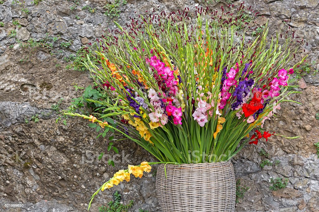 Gladiola flowers in pink purple yellow red white in basket stock photo