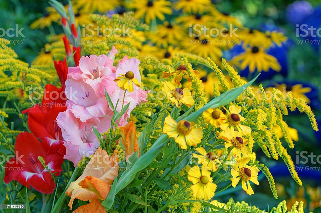 Gladiola, helenium and echinacea stock photo