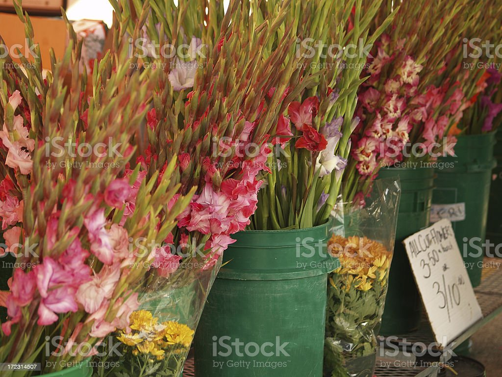 Gladioli royalty-free stock photo