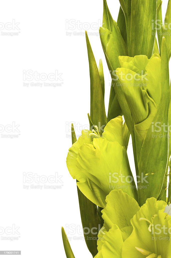 Gladiolus bouquet royalty-free stock photo