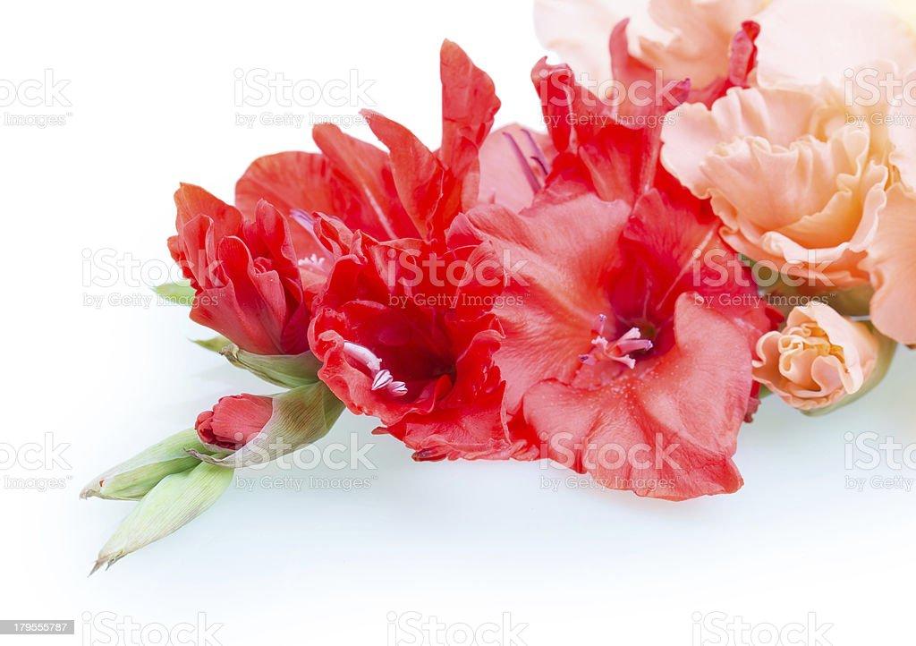 gladiolus flower royalty-free stock photo