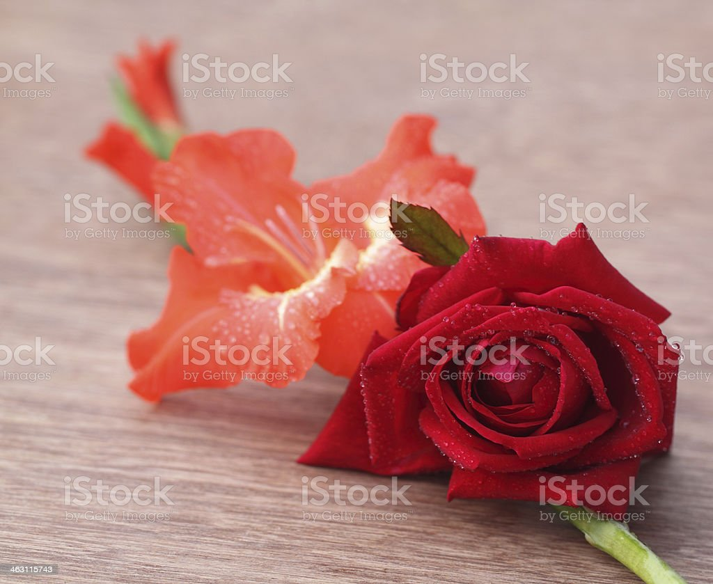 Gladiolus flower with rose stock photo