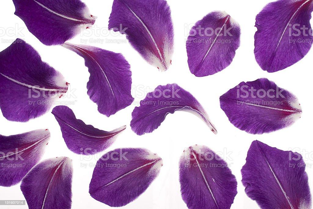 gladiolus petals stock photo