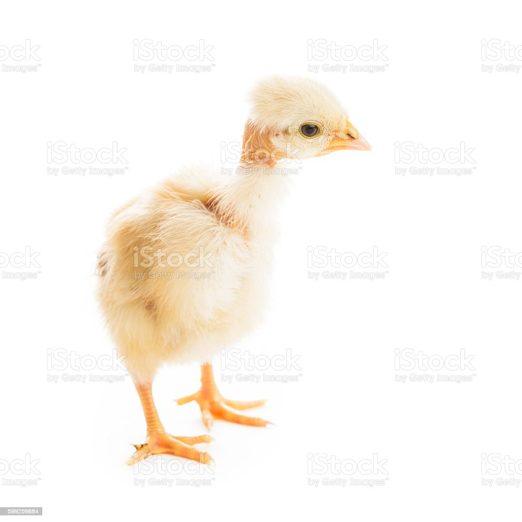 Glamour chick isolated stock photo
