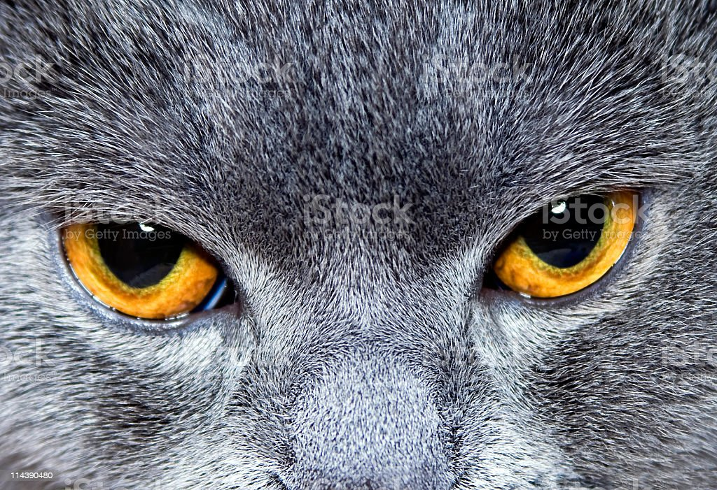 glare cat's sight royalty-free stock photo