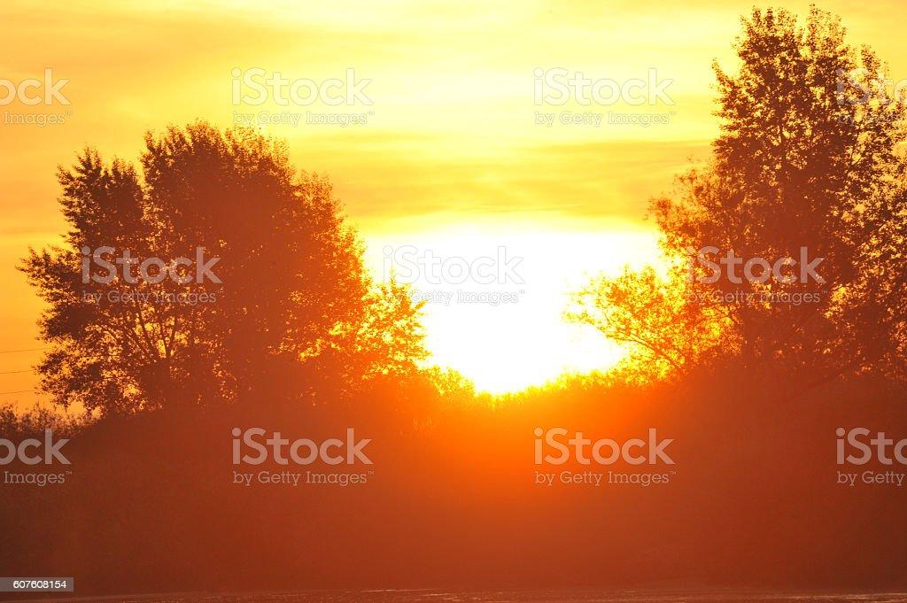 glare-between tree stock photo