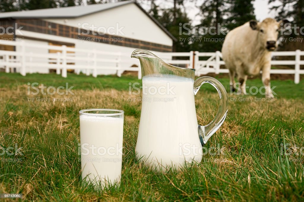 A glass and pitcher full of milk in front of a cow stock photo