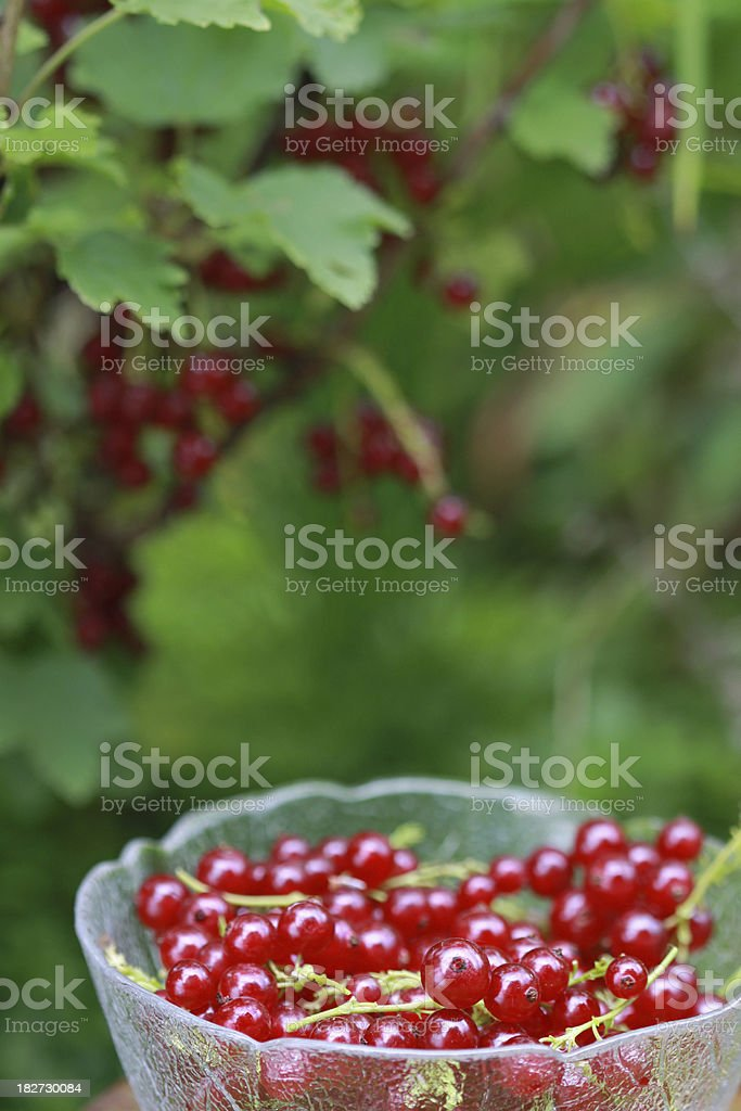 Glass bowl with red currants royalty-free stock photo