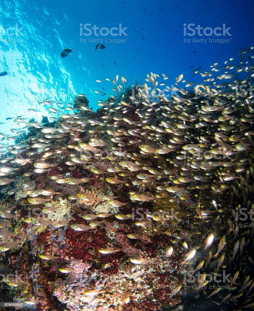 glass fish school stock photo