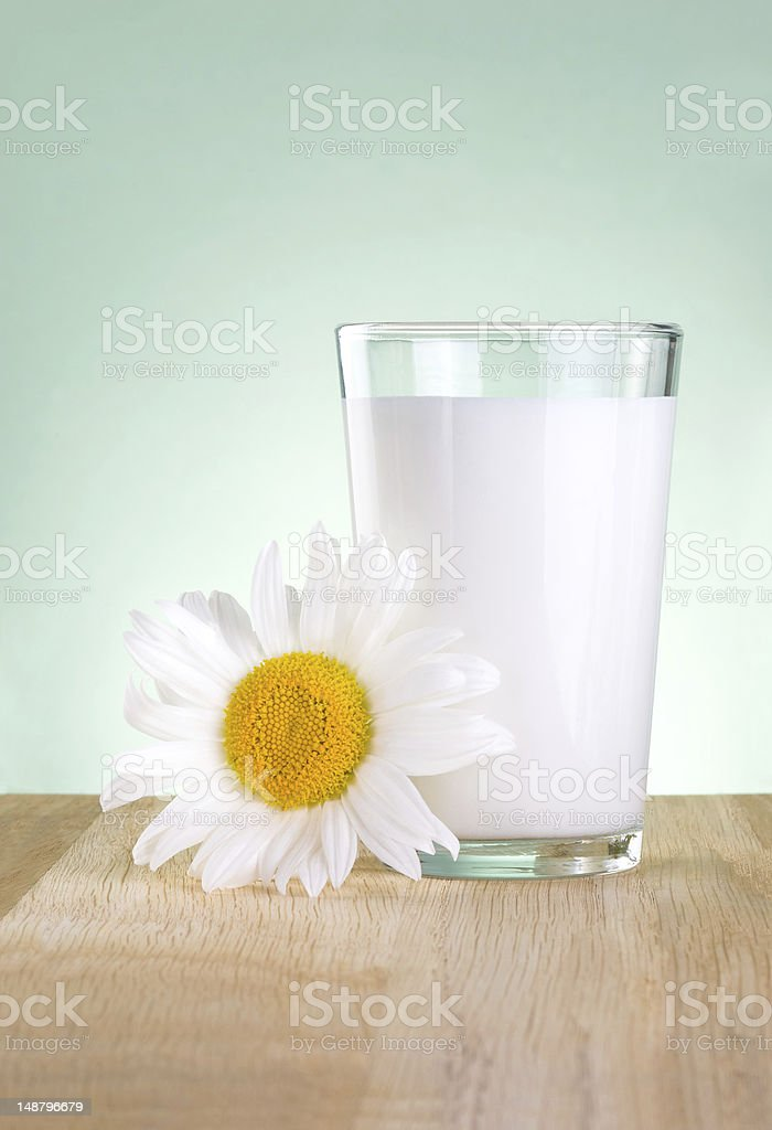 Glass fresh milk and one chamomile flowers is wooden table royalty-free stock photo
