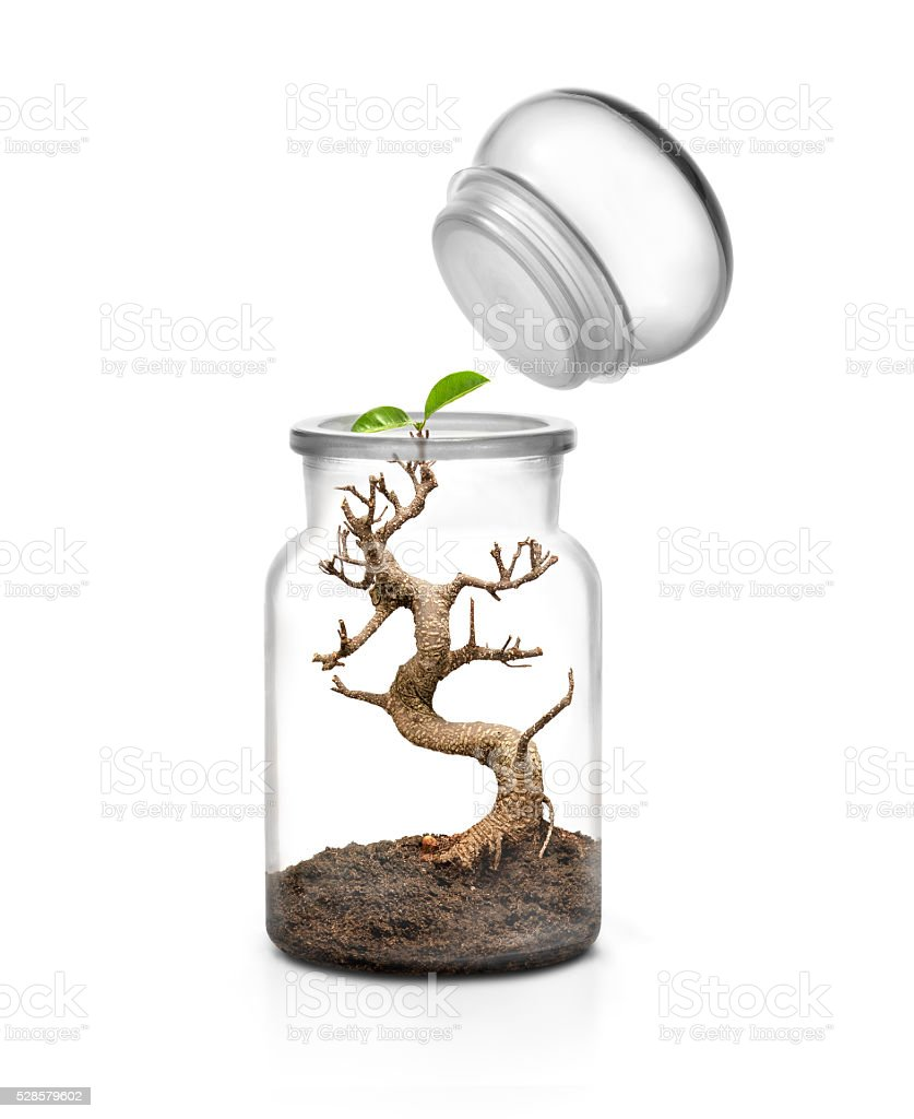 Glass jar with cap and bonsai growing inside stock photo