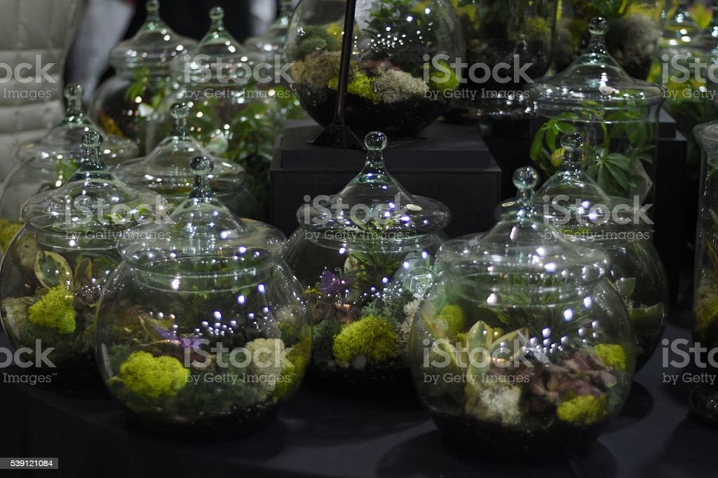glass jars filled with plants stock photo