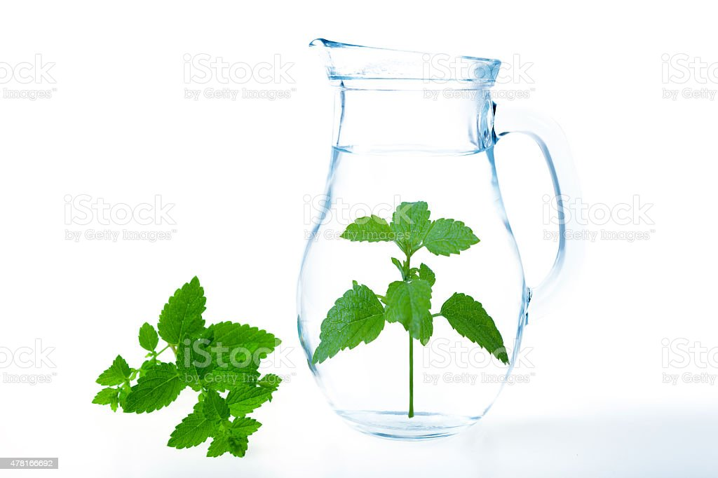 glass jug of water with mint stock photo