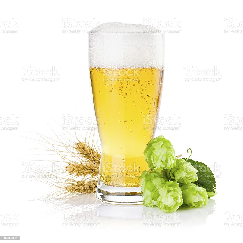 Glass of beer with Green hops and ears barley isolated stock photo