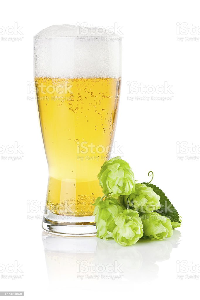 Glass of fresh beer with Green hops isolated on white stock photo