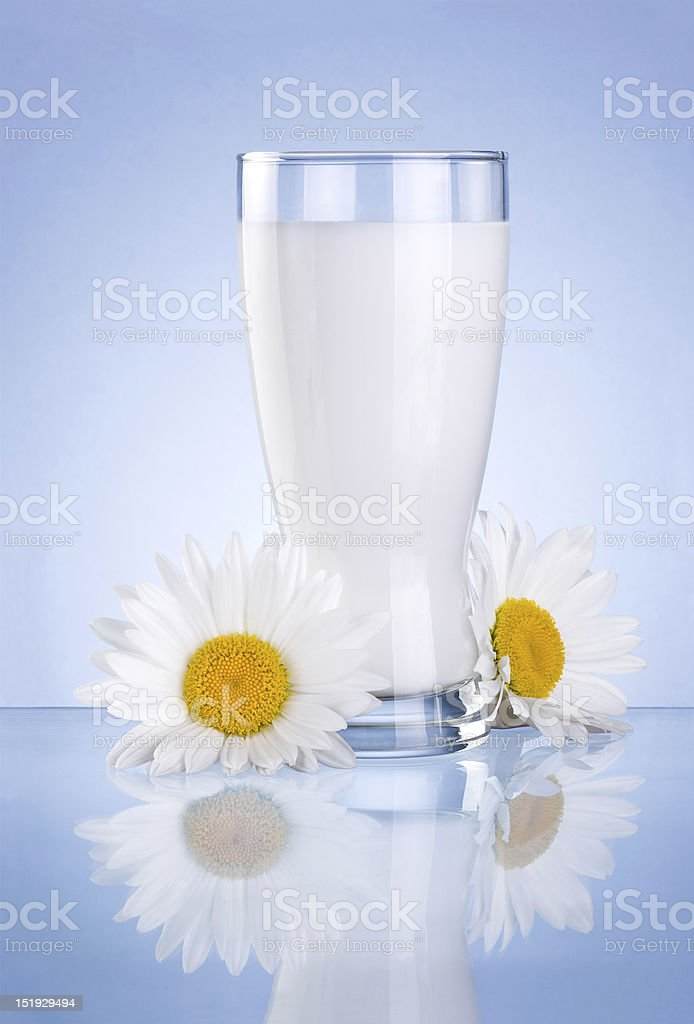 Glass of fresh milk and two chamomile flowers isolated royalty-free stock photo