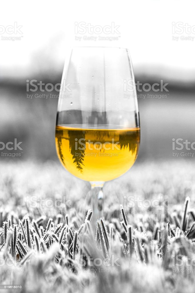 Glass of ice cider stock photo
