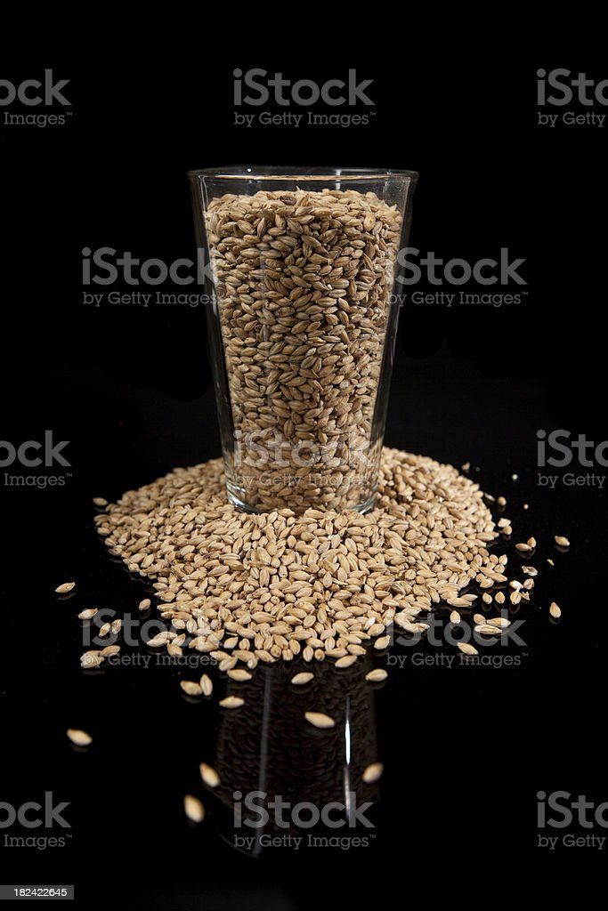 Glass of Malted Barley for Beer Making stock photo