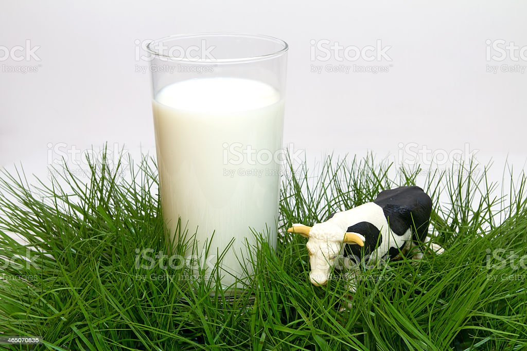Glass of milk with cow stock photo