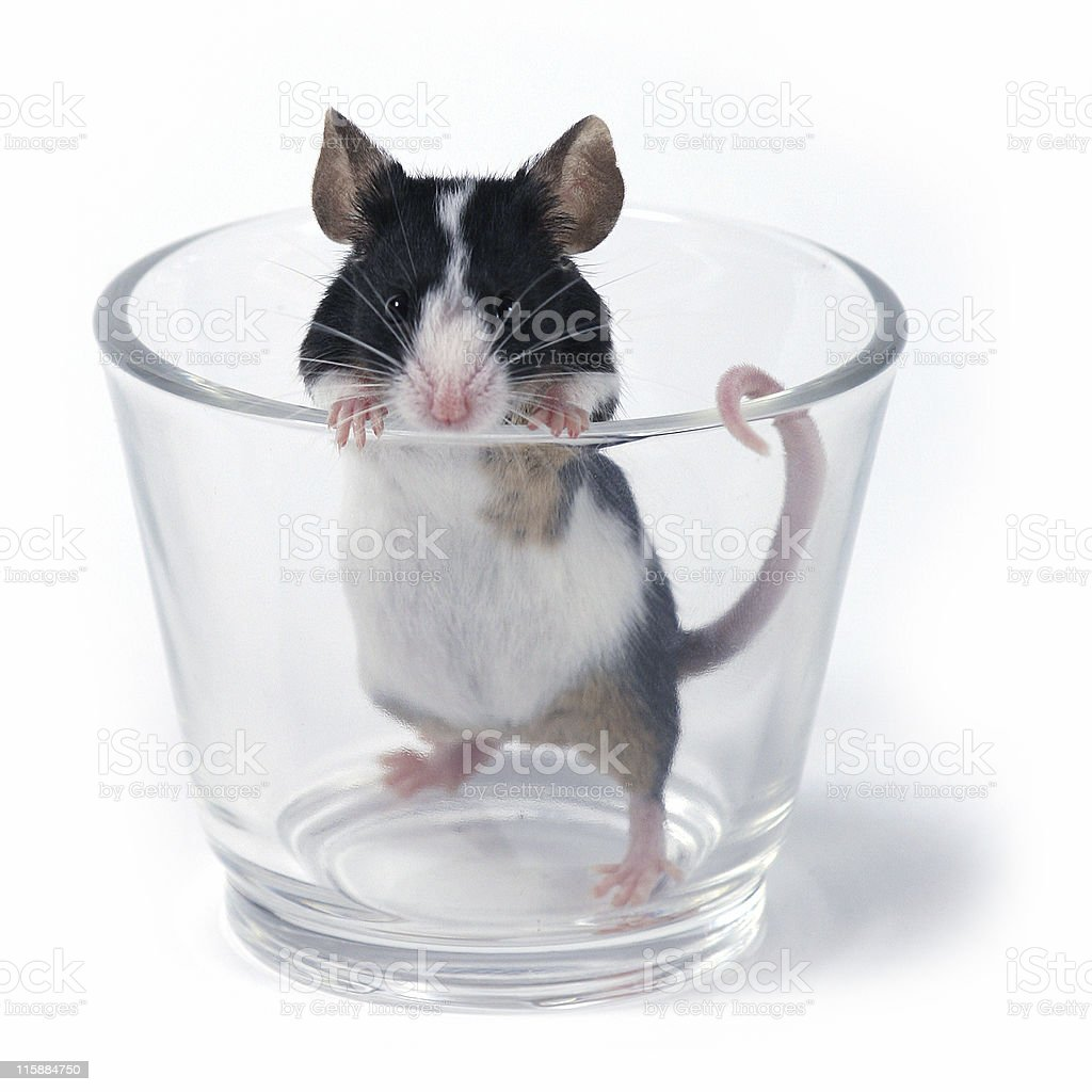 glass of... mouse royalty-free stock photo