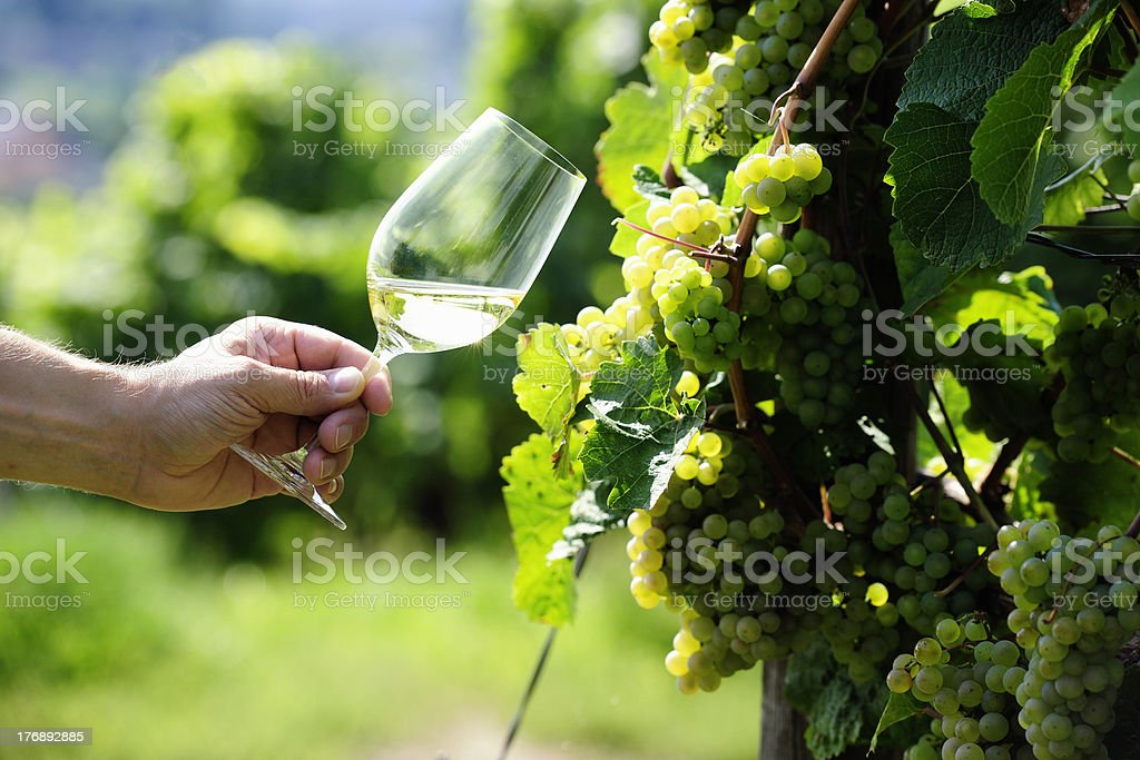 Glass of white Wine and riesling grapes stock photo